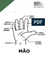 05.Anatomia Da Mão