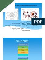 01- sangre - suero y plasma.pdf