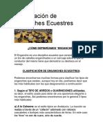 Clasificación de Enganches Ecuestres.docx
