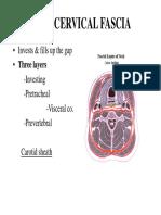 Head & Neck- Deep Cervical Fascia &Cervical Plexus