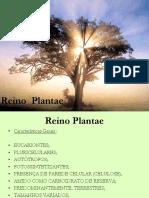 REINO PLANTAE características dos grupos.ppt