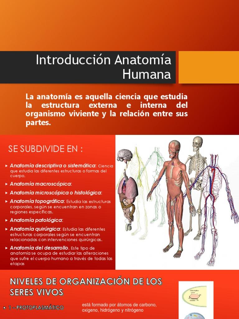 Introducción Anatomía Humana