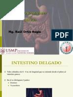 Clase Intestino Delgado y Grueso