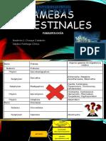 CLASE 2 Amebas Intestinales 1