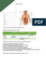 A Figura Seguinte Representa o Sistema Digestivo Humano