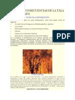 Causas y Consecuencias de La Tala Inmoderada