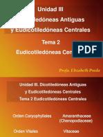 Dicots Antiguas y Eudicots Centrales