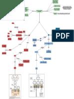 7. Receptores Imunológicos e a Transdução de Sinais