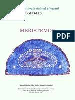 V Meristemos