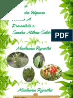 Herbario Jardín Botánico José Celestino Mutis