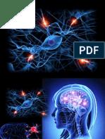 NERVOUS SYSTEM ONE.pptx
