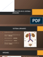 Sistema Urinario Radiologia Generalidades
