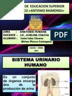 Sistema Urinario Humano