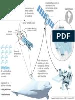 Con un satélite seguirán a delfines de la Amazonia