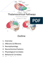 Corticothalamic Pathways