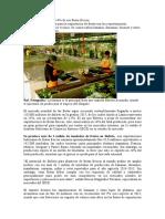 Bolivia Solo Exporta Un 14.Doc
