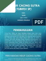 Tubifex Sp