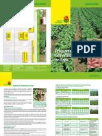 Programa_COMPO_Papas.pdf