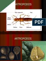06+animais+02+artropodos
