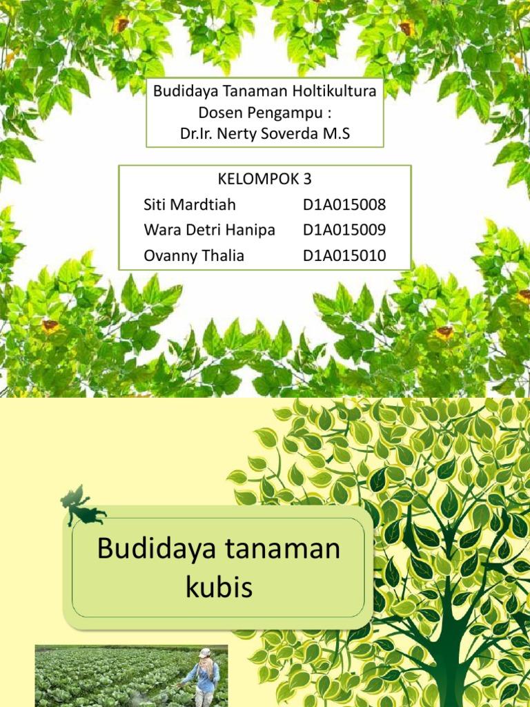 Kel 3 Hortikultura Budidaya Tanaman Kubis
