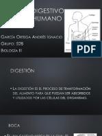 Sistema Digestivo Del Ser Humano