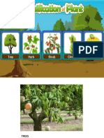 Grouping of Plants