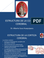 2.4. Estructura de La Corteza Cerebral