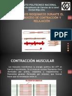 PASOS BIOQUIMICOS DURANTE EL PROCESO DE CONTRACCI+ôN Y