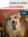 Chistes i To