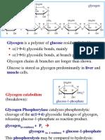 9 Glycogen