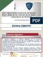 Presentacion Aparato Digestivo Morfofisiologia
