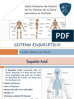 Presentacion Sistema Esquelético Morfofisiologia