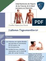 Presentacion Sistema Muscular Morfofisiologia