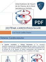 Presentacion Sistema Cardiovascular Morfofisiologia