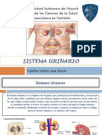 Presentacion Sistema Urinario Morfofisiologia