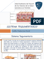 Presentacion Sistema Tegumentario Morfofisiologia