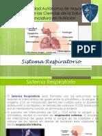 Presentacion Sistema Respiratorio Morfofisiologia Sin Fotos