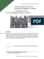 articulo cientifico platano (1).doc
