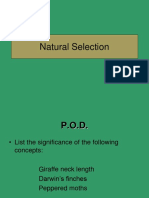 natural selection  concept 3