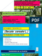 Diapositiva de Centeno