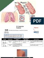 Tratamiento por Acupuntura Asma EPOC, bases fisiológicas, Universidad Estatal del Valle de Toluca
