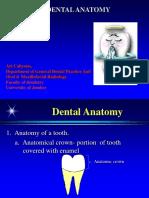 dental anatomy 1.ppt