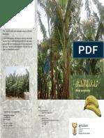 Brochure Bananas.pdf