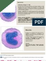 Aparato Cardiovascular 2