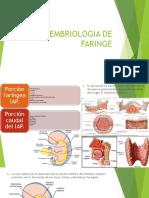 Embriologia de Faringe (1)