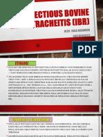 ppt IBR