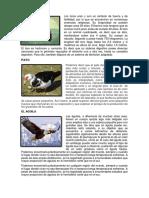animales de huachipas.docx