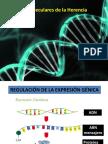 Clase 1 Genética 2017
