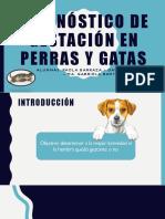 Diagnóstico Gestación Perra y Gata