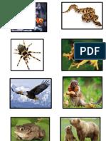 ANIMALES VARIOS.docx